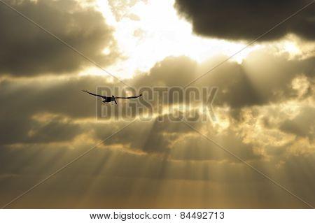 Sun Ray Heaven
