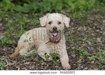 Cute Dog  Happy And Fluffy