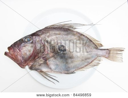 Fresh St Peter's Fish On White Plate