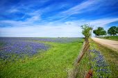 pic of bluebonnets  - Bluebonnet field and a fence along a country road in Texas spring - JPG