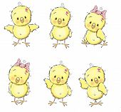 foto of baby chick  - Six cute chicks isolated on a white background - JPG