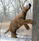 image of prehistoric animal  - An illustration of the extinct giant ground sloth Megalonyx searching a tree for food in an Ice Age Ohio forest - JPG