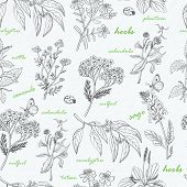 pic of ladybug  - Vector seamless pattern with herbs on a white background - JPG