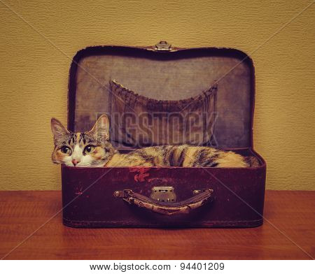 Cute Cat Lying In A Suitcase