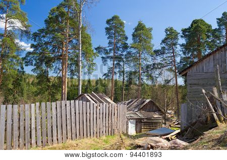 Rural buildings in the pine forest