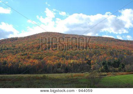Follaje de otoño 35
