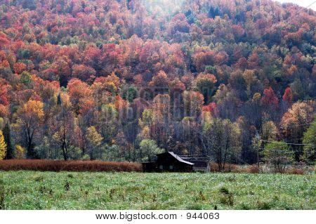 Follaje de otoño 20