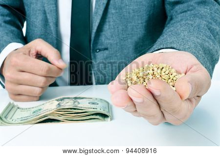 closeup of a young caucasian businessman with a pile of buckwheat seeds in his hand and a pile of dollar banknotes on his office desk, depicting the agribusiness concept