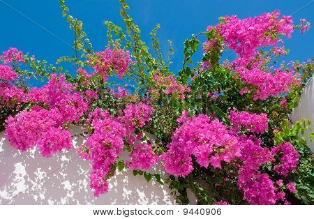 Beautiful Pink Flowers Against The Sky. Background.