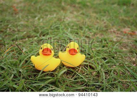 Yellow Rubber Duck On Greengrass Background.