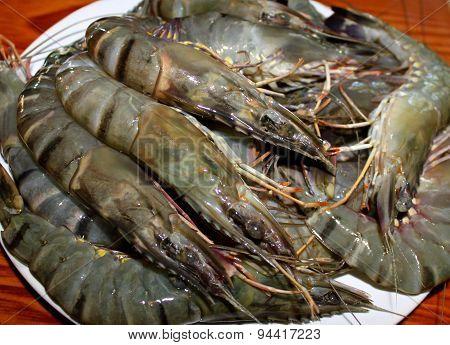 Fresh Shrimp King Size