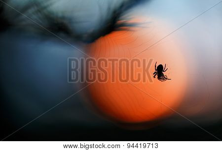 Spider with bright yellow sun light, network of spider,