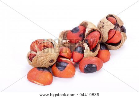Bright Red Seeds And Pods Of The Natal Mahogany Tree