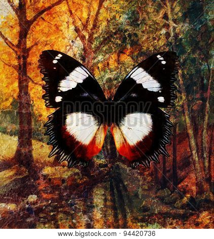 Butterfly And Landscape Forest  Painting And  Rust Structure