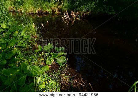 Water Forest River Reflects The Old Forest And Coastal Plants Beaver Platinum Is Almost Completely