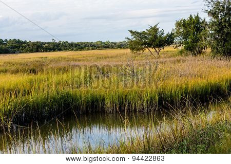 Stream Through Wetland Marsh