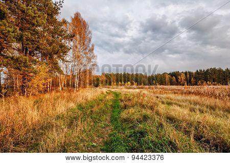 autumnal field under gloomy sky