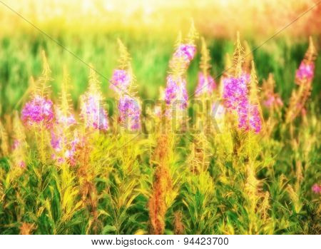 Summer field with flowers in defocus. Nature background