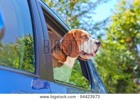 Beagle Blue Car