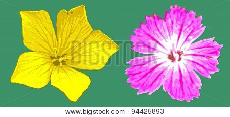 vector yellow and magenta flowers