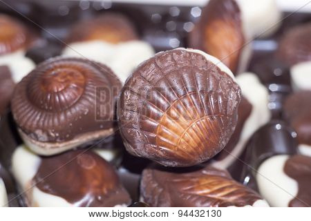 Seashell Candies