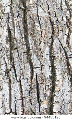 Crack Bark Texture