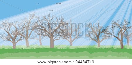 Forest In The Sunny Day, Rays, Trees Silhouettes