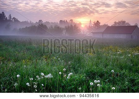 Sunrise With Dandelions