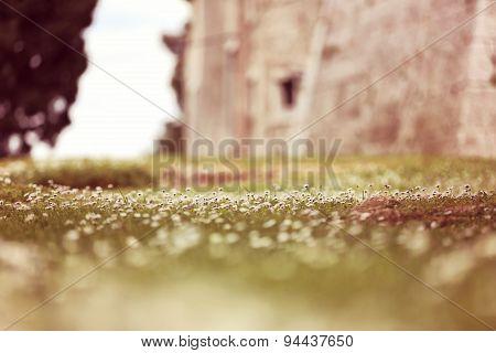 Chamomile Fields