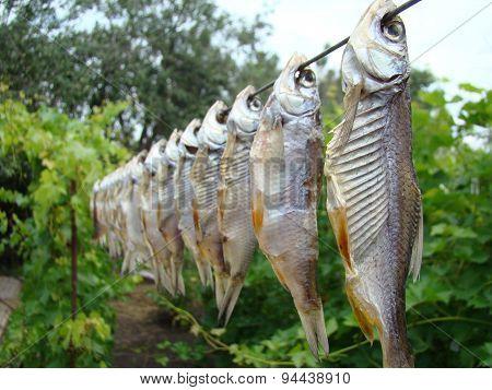 Fish Jerky