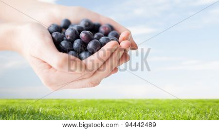 healthy eating, dieting, vegetarian food and people concept - close up of woman hands holding ripe blueberries over grass and blue sky background