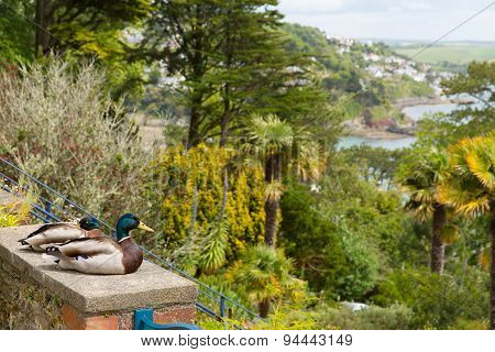 Views from Overbecks Edwardian house gardens in Salcombe Devon England UK tourist attraction