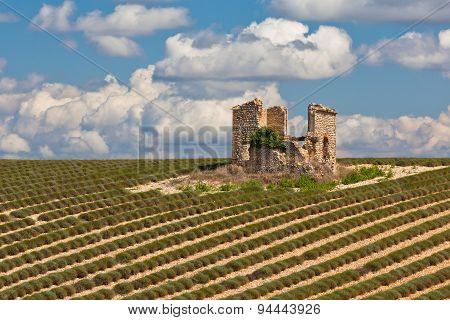 Stone House Ruin In Harvested Lavender Field