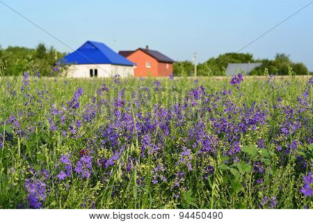 Lawn With Wildflowers In Front Farmhouses