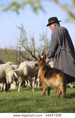 Sheepherder With His Dog