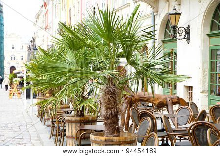 City cafe terrace with beautiful palms outdoors