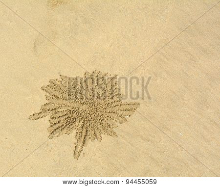 Crabs Holes On Beach Sand