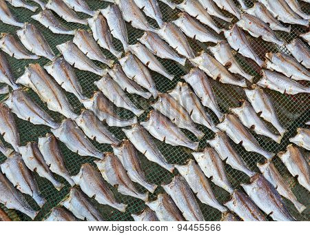 Dried Fishes In Mekong Delta, Vietnam