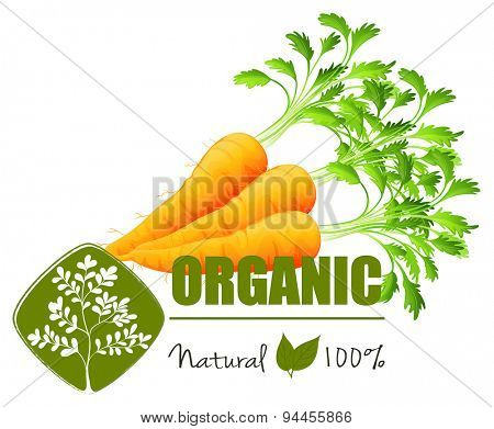 Farm fresh organic carrots with leaves