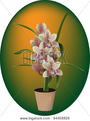 illustration with dark orchid in pot