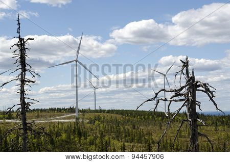 Wind Mills In Landscape