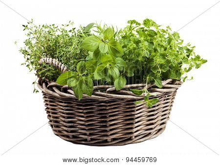 Herbs variety in old wicker basket isolated on white background