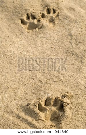 Pawprints In The Sand.
