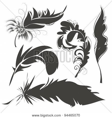 Set bird feathers for drawing