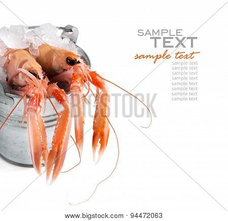 Raw Langoustines On Ice In A Bucket