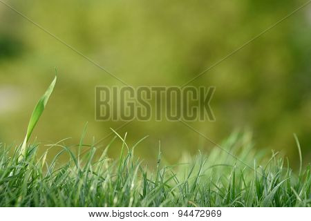 Grass and blurred background