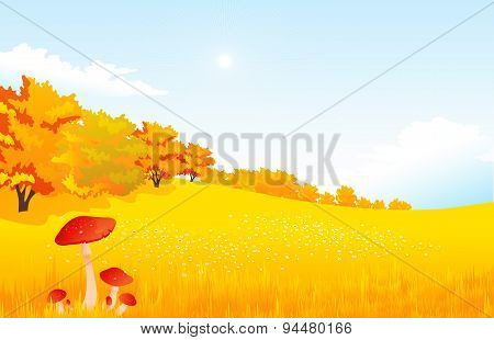 Vector illustration autumn rural landscape with meadow and forest