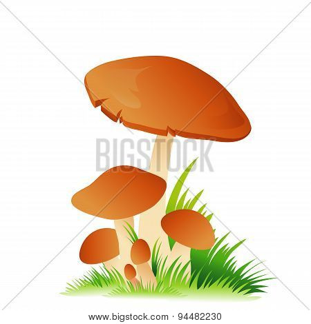 Edible mushroom porcini with grass on white background