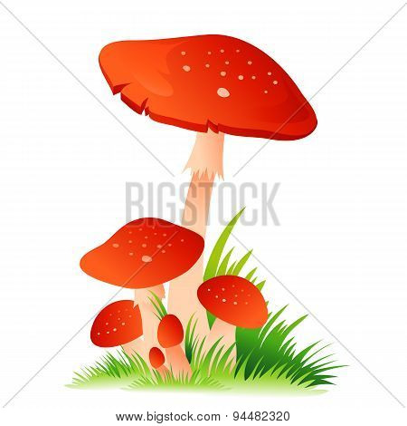 Red Mushroom Amanita with grass on white background