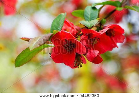 Authentic Beautiful Flowers On Blurred Background, Bokeh. Soft Selective Focus. Closeup Image.
